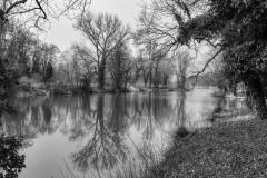 Zrcadlení stromů / Mirroring